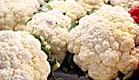 כרוביות (צילום: עודד קרני)