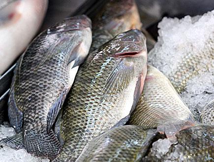 דגים מתים קפואים (צילום: עודד קרני)