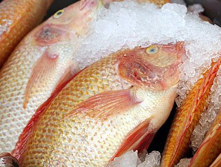 דגים ורדרדים בשוק (צילום: עודד קרני)