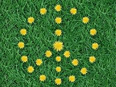 פרחים צהובים בצורת פיס על דשא