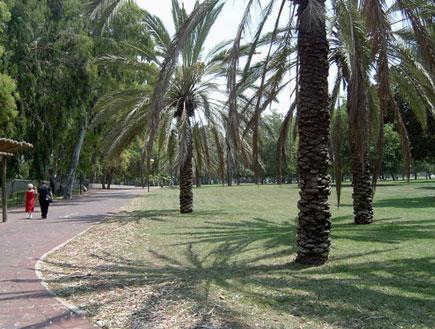 טיול בתל אביב: דקלים בפארק הירקון