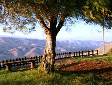 עץ המשקיף להרים בגן היורד לואדי קלט (צילום: סתיו שפיר)