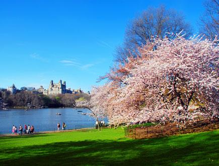 סנטרל פארק ניו יורק (צילום: iStock)
