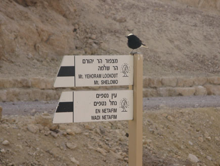 טיולים בדרום: ציפור יושבת על השלט לכיוון הר שלמה