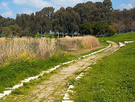 שביל הליכה מוקף צמחייה בתל אפק (צילום: דוד רבקין)