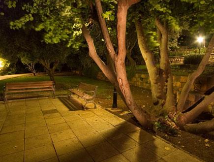 טיולים בצפון: שני ספסלים ליד עץ בלילה בראש פינה (צילום: איציק מרום)