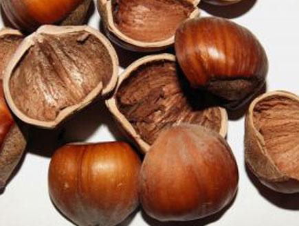 אגוזי לוז (צילום: istockphoto)