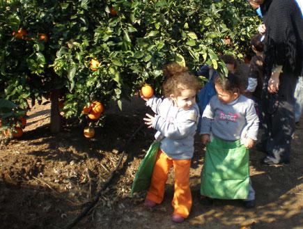 טיולי משפחות: לדות ליד עץ הדר בשביל התפוזים (צילום: עדי רם)