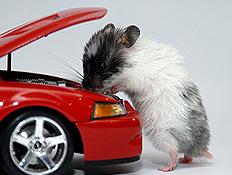 עכבר בודק מנוע של מכונית