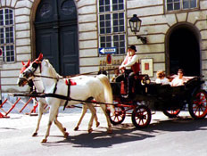 עגלה רתומה לשני סוסים לבנים בוינה (צילום: עדי רם)