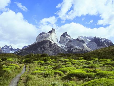 שיחים ירוקים תחת הר באזור האגמים בצ'ילה (צילום: יוסי מלמד)