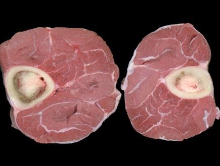 מוח עצם (צילום: istockphoto)