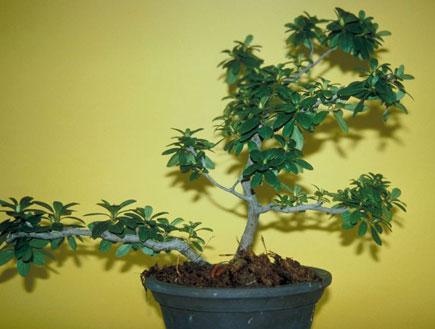 עציץ ירוק (צילום: jupiter images)