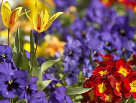 פרחים צבעוניים (צילום: BananaStock, Istock)