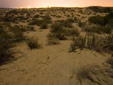 טיולים במישור החוף: חוף ניצנים (צילום: איציק מרום)