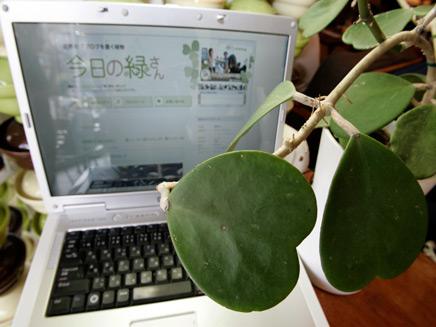 """עציץ בשם """"מידורי סאן"""" שיש לו בלוג - על רקע מחשב (צילום: רויטרס)"""
