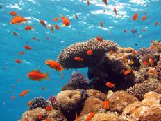 טיולים בדרום: ריף האלמוגים באילת (צילום: desertdiver, Istock)