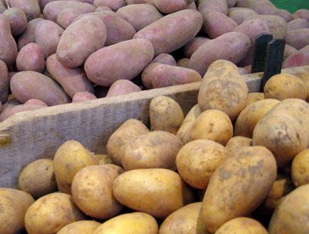 תפוחי אדמה (צילום: דן-יה שוורץ)