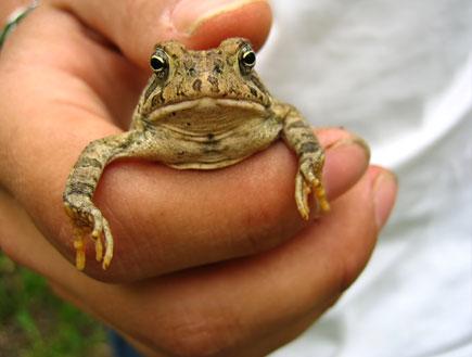 יום כיף: צפרדע בפארק הוזחלים בשפיים (וידאו WMV: stock_xchng)