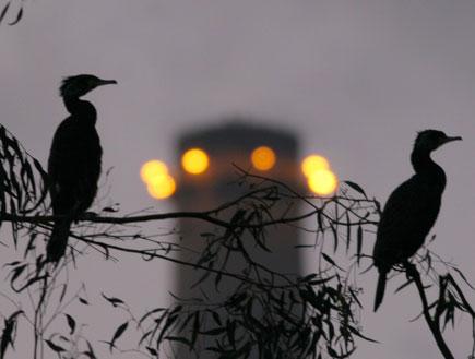 """סיור צפרות של החברה להגנת הטבע -בילוי לסופ""""ש (צילום: אסף מירוז)"""