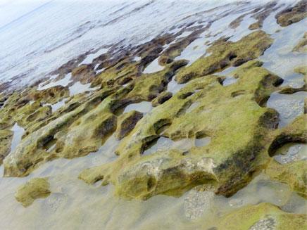 חוף בצת (צילום: גיא צומר)