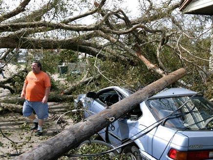 מכונית שנפגעה מעץ, ארכיון (צילום: רויטרס)
