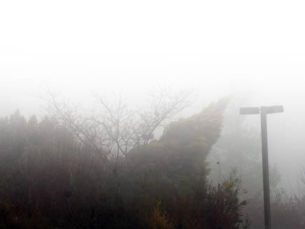ערפל (צילום: חדשות 2)