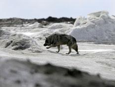 אלסקה (צילום: Justin Sullivan, GettyImages IL)