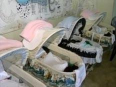 שלושה תינוקות חדשים הצטרפו למשפחה (צילום: חדשות 2)