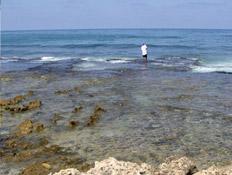 טיולים בצפון: חוף אכזיב (צילום: איל שפירא)