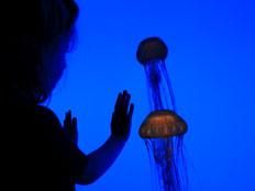 האם מדוזה זעירה מחזיקה בסוד חיי הנצח? (צילום: אימג'בנק - gettyimages)