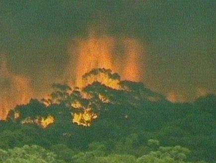 אוסטרליה עולה בלהבות; עשרות קורבנות (תמונת AVI: חדשות)