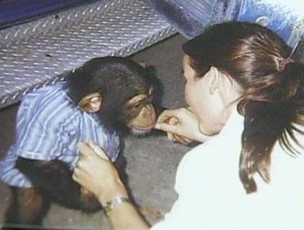 הקוף השתגע ותקף את הבעלים (תמונת AVI: חדשות)