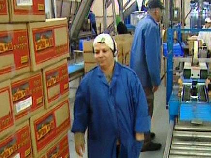 פרי גליל - מפטרים עובדים (צילום: חדשות 2)