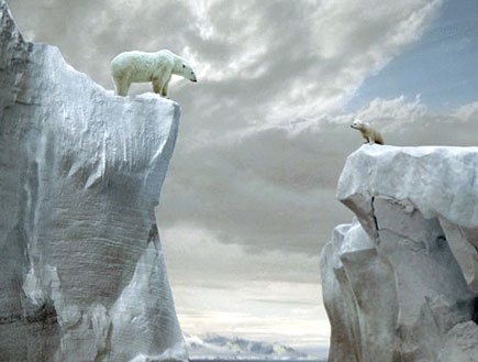 הדובים מהפרסומת של אורנג' (צילום: orange)