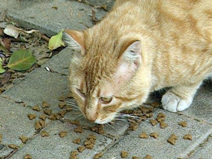 החתול נעלם בנמל התעופה, אילוסטרציה (צילום: חדשות 2)