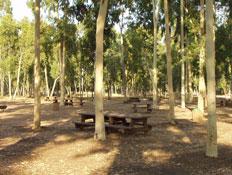 טיול בשרון: יער אילנות (צילום: החברה להגנת הטבע)