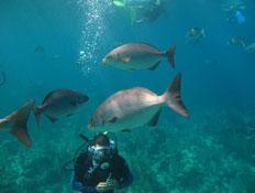 צלילה (צילום: ניר חולי)