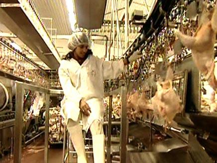 מפעל עוף העמק ברמת ישי (חדשות 2) (צילום: חדשות 2)