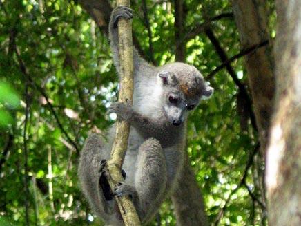 קופים תקפו מבקר. ארכיון (צילום: רויטרס)