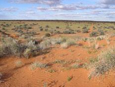 אוסטרליה 7 (צילום: איל שפירא)