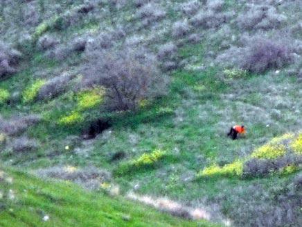 חילוץ פצוע ממוקש במסוק (ורד אביישר) (צילום: ורד אביישר)