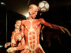 תערוכת עולמות גוף (צילום: Mark Renders, GettyImages IL)