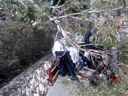 אישה נפצעה אנושות בעקבות קריסת עץ (צילום: דוברות מדא)