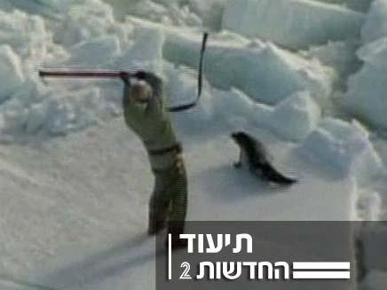 ציד כלבי ים (צילום: חדשות 2)