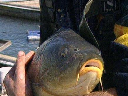 פסח בא: זה הזמן לקנות דגים (תמונת AVI: חדשות)