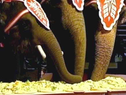 תחרות אכילת פיצה לפילים (צילום: חדשות 2)