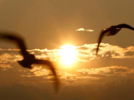 חזון אחרית הימים (צילום: רויטרס)