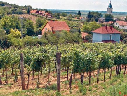 כפר טרצל, הונגריה (צילום: גלובס)