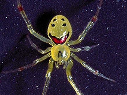עכביש מחייך (צילום: טלגרף)